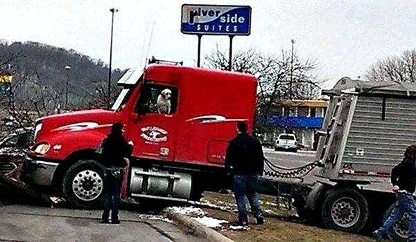 كلب «يقود» شاحنة صاحبه