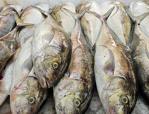 """7 ملايين ريال قيمة استثمار """"الأسماك العمانية"""" خلال  خمس سنوات"""