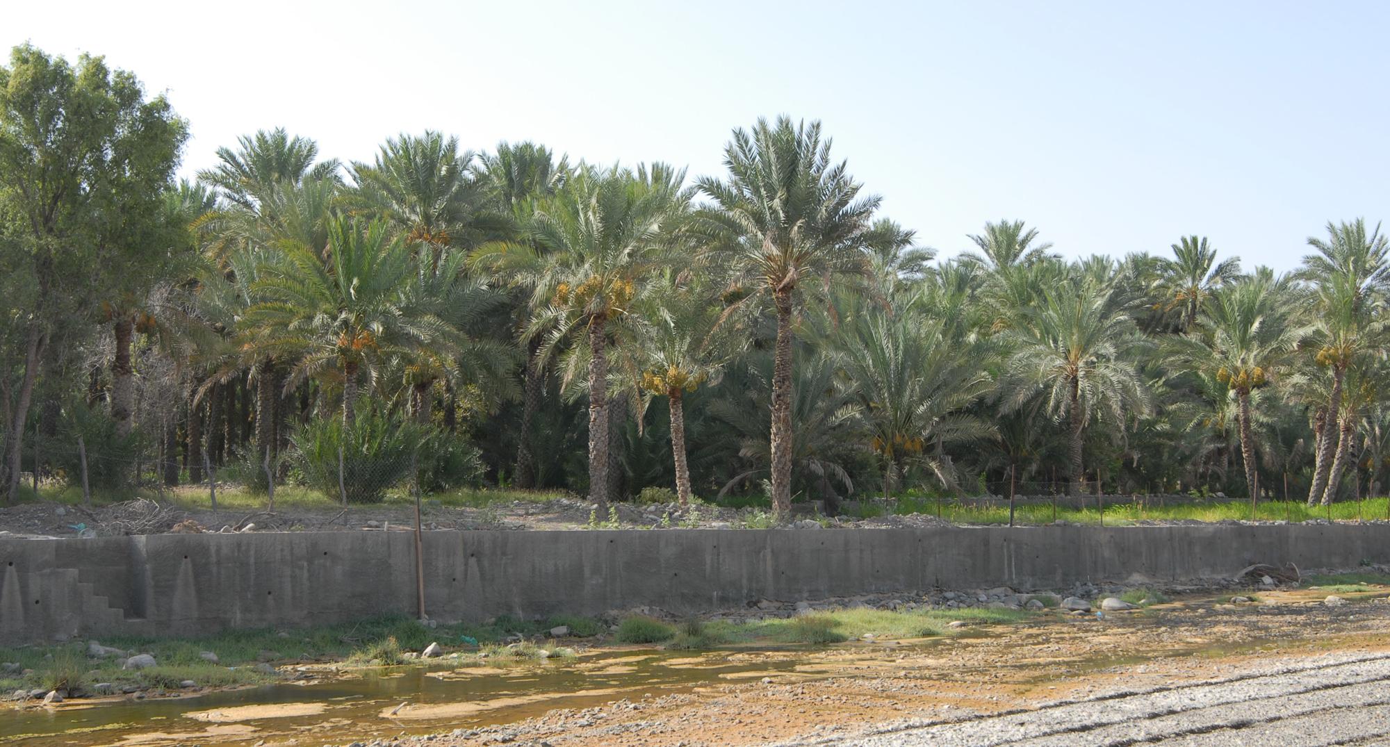 """الانتهاء من تنفيذ مشروع حائط الحماية لمزارع قرية """"محليا"""" بنيابة سمدالشأن"""