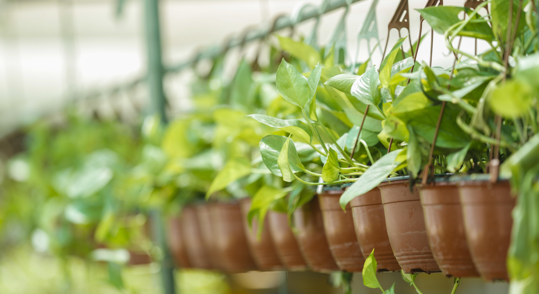 Grow Indoor Plants in Oman
