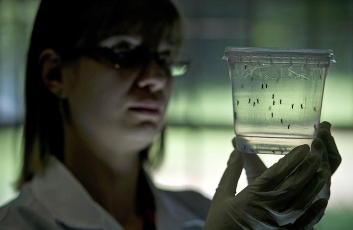اكتشاف سادس إصابة بفيروس زيكا في كوريا الجنوبية