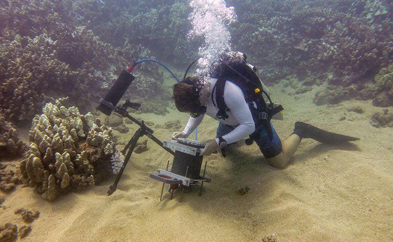 لأول مرة في تاريخ دراسة المحيطات: مجهر يكشف السلوك الدقيق للحياة البحرية بمنطقة الحاجز المرجاني