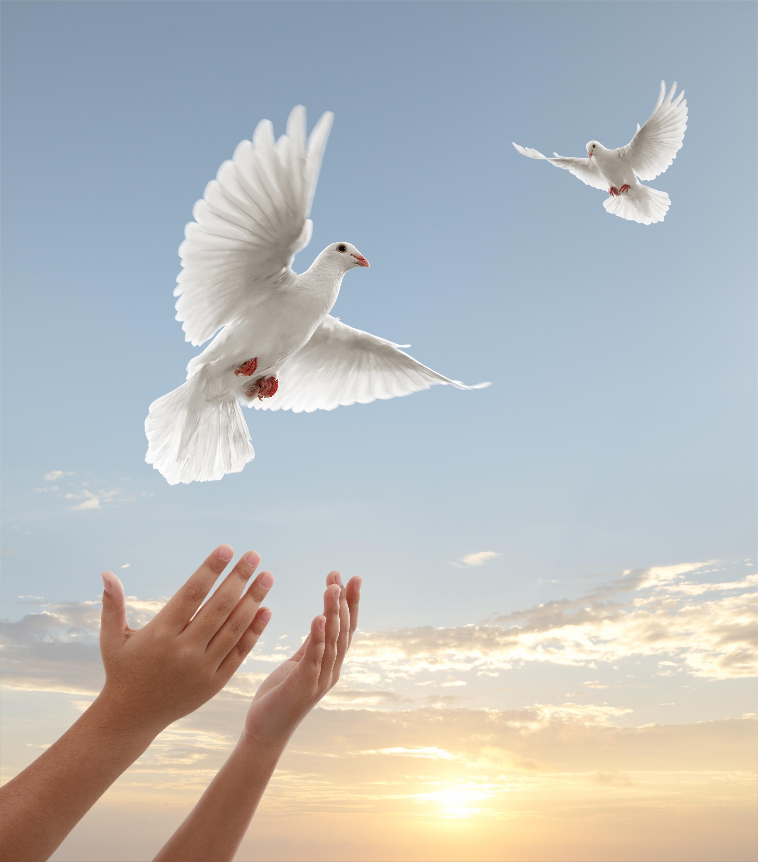 سلطنة عمان.. حمامة السلام إلى العالم
