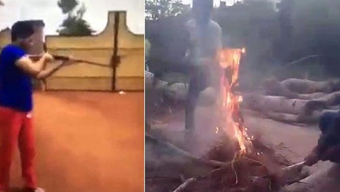 Three puppies burnt alive by youngsters in Hyderabad