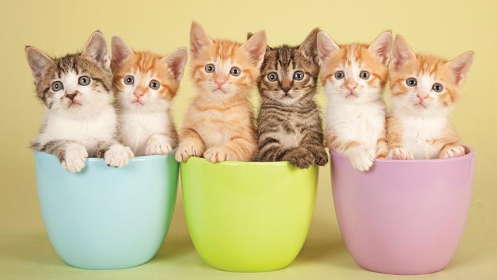 Fun Facts: Kittens