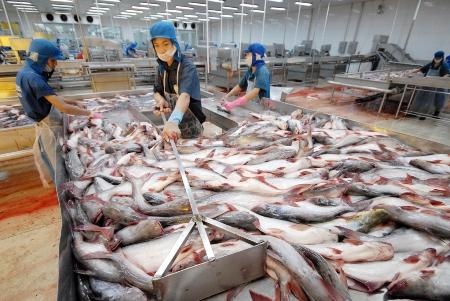 منظمة الأونكتاد: صادرات العالم من الأسماك نمت بمعدل عشرة أضعاف خلال عقد