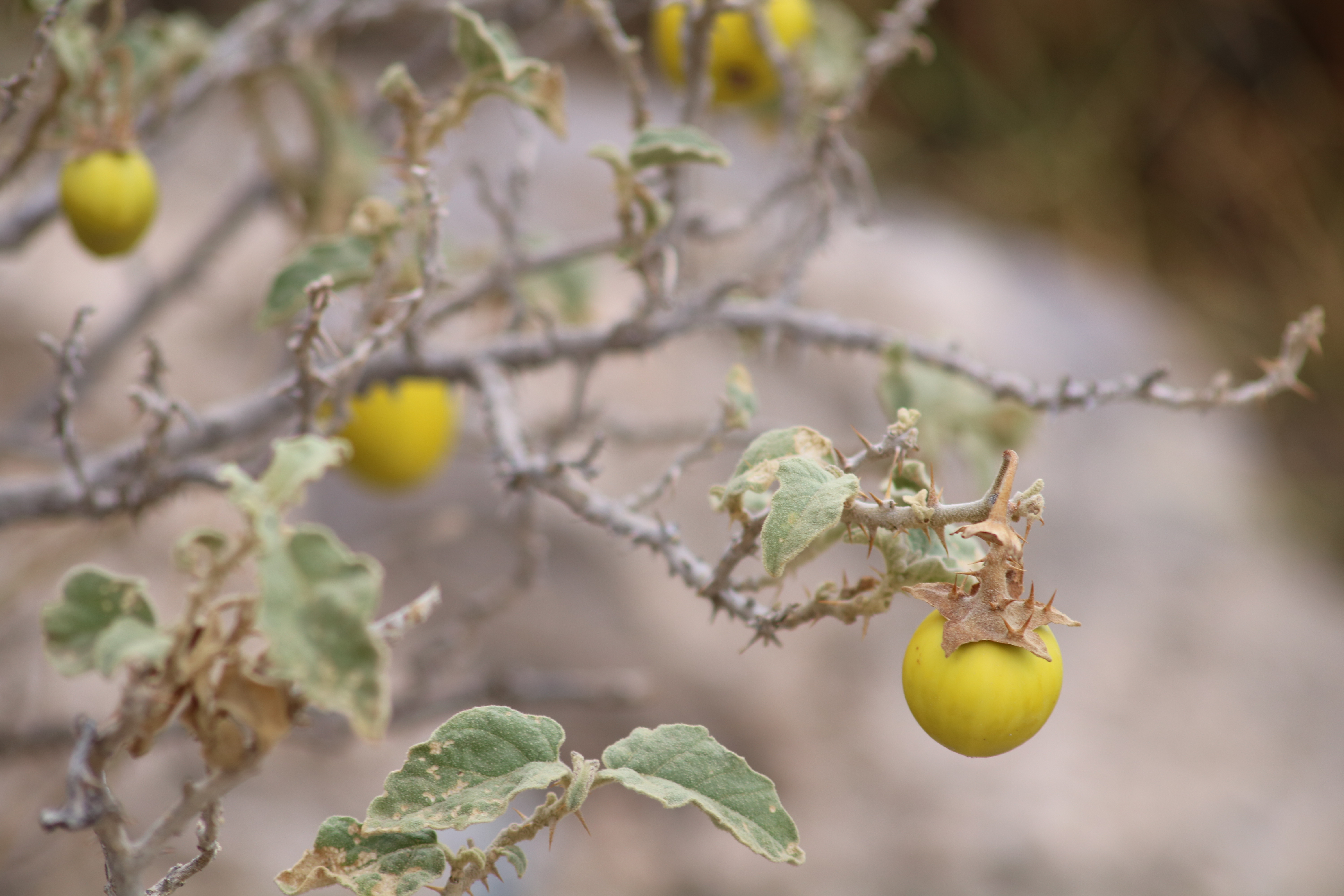 Oman Travel: A Cool Summer Hike Through the Orchards of Wakan Village in Oman
