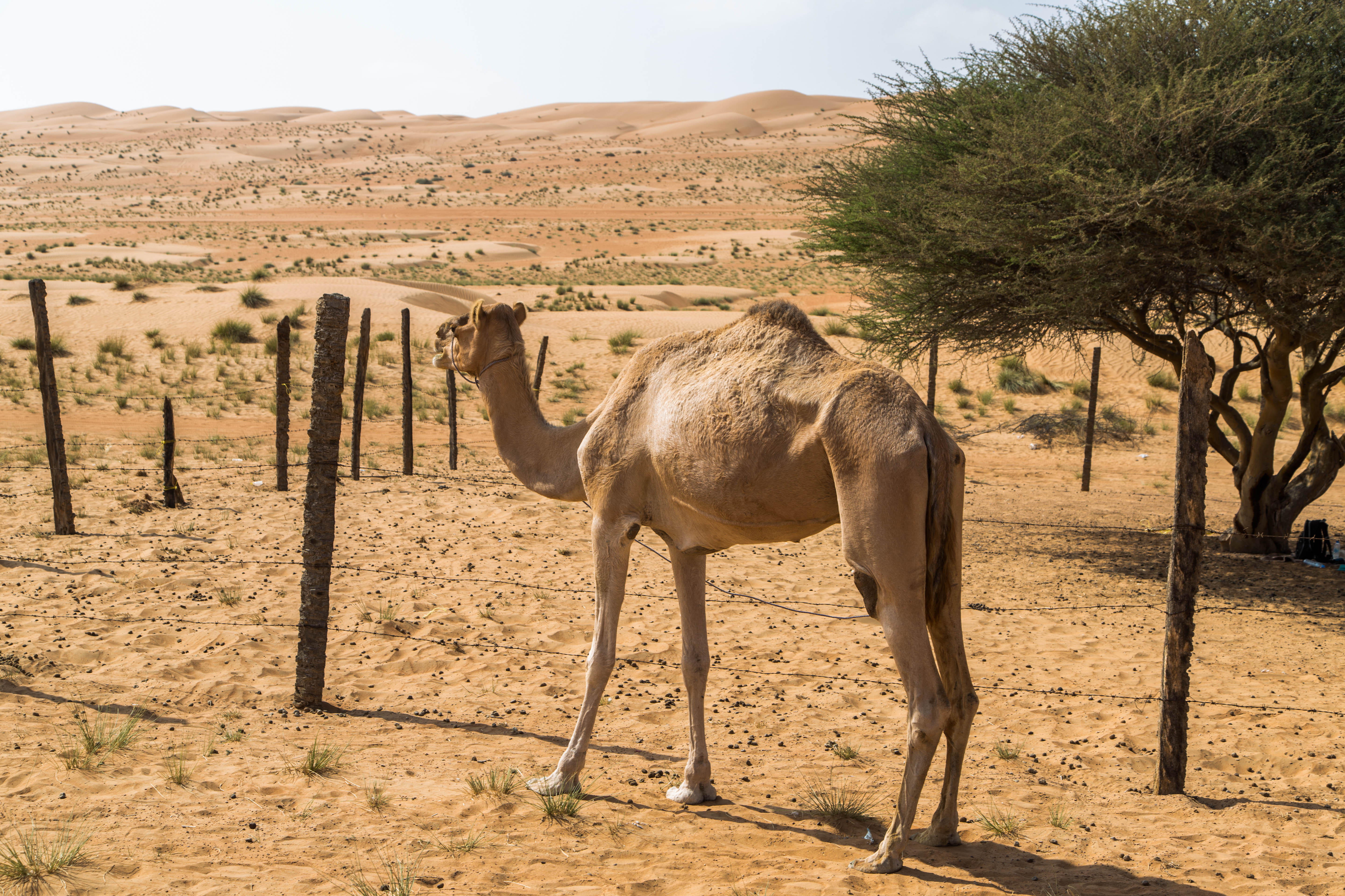 Special feature: All you need to know about breeding in Oman!