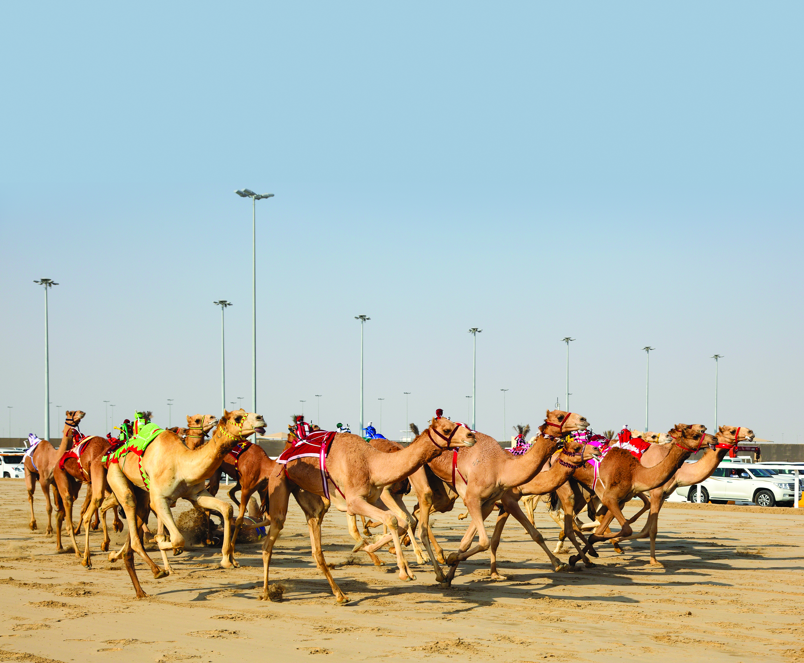 Check out Oman's traditional Camel races, performances and beauty festivals!