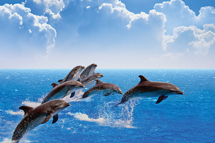 Fun facts: All about dolphins