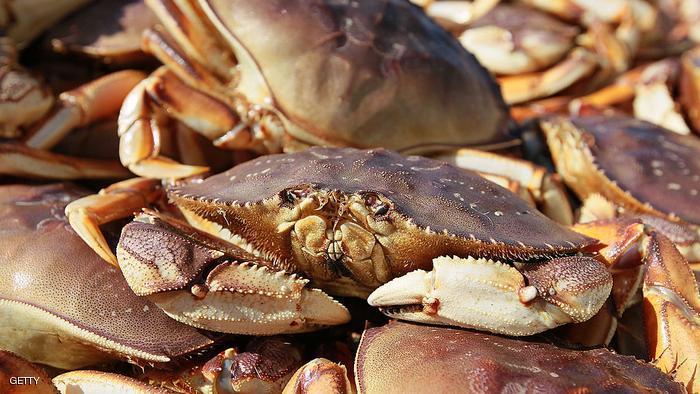 """لهواة المأكولات البحرية: احذروا """"البلاستيك"""""""