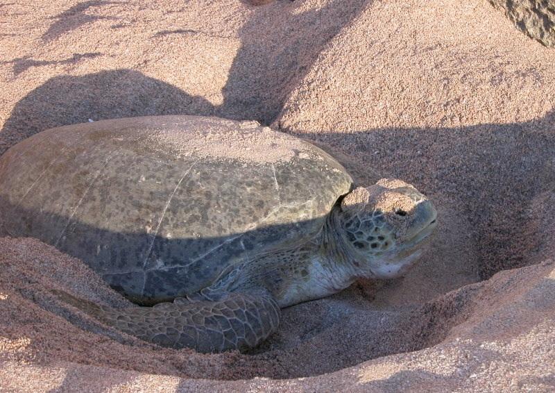Oman Tourism: 19,545 people visited Ras al Jinz Turtle Reserve in 2016