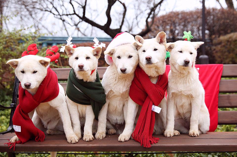 Complaint against Park for abandoning nine pet dogs