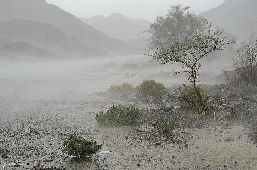 حالة الطقس.. استمرار فرص هطول الأمطار