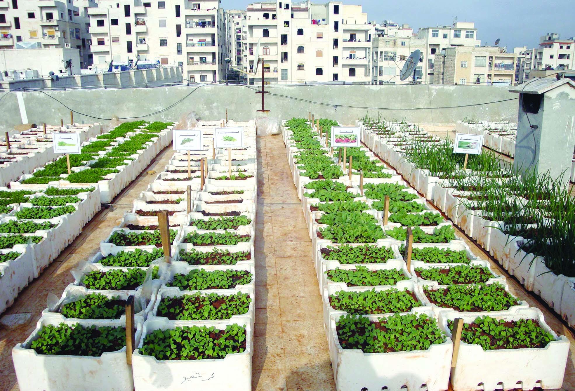 المصريون يكافحون الغلاء بزراعة أسطح المنازل