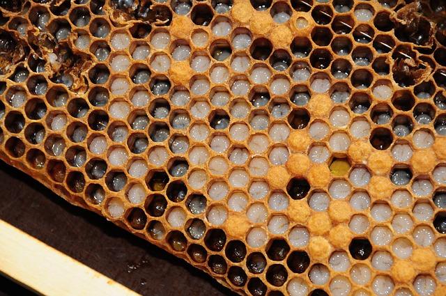 من يعتقد أن العسل مفيد للعينين.. اقرأ هذا الخبر