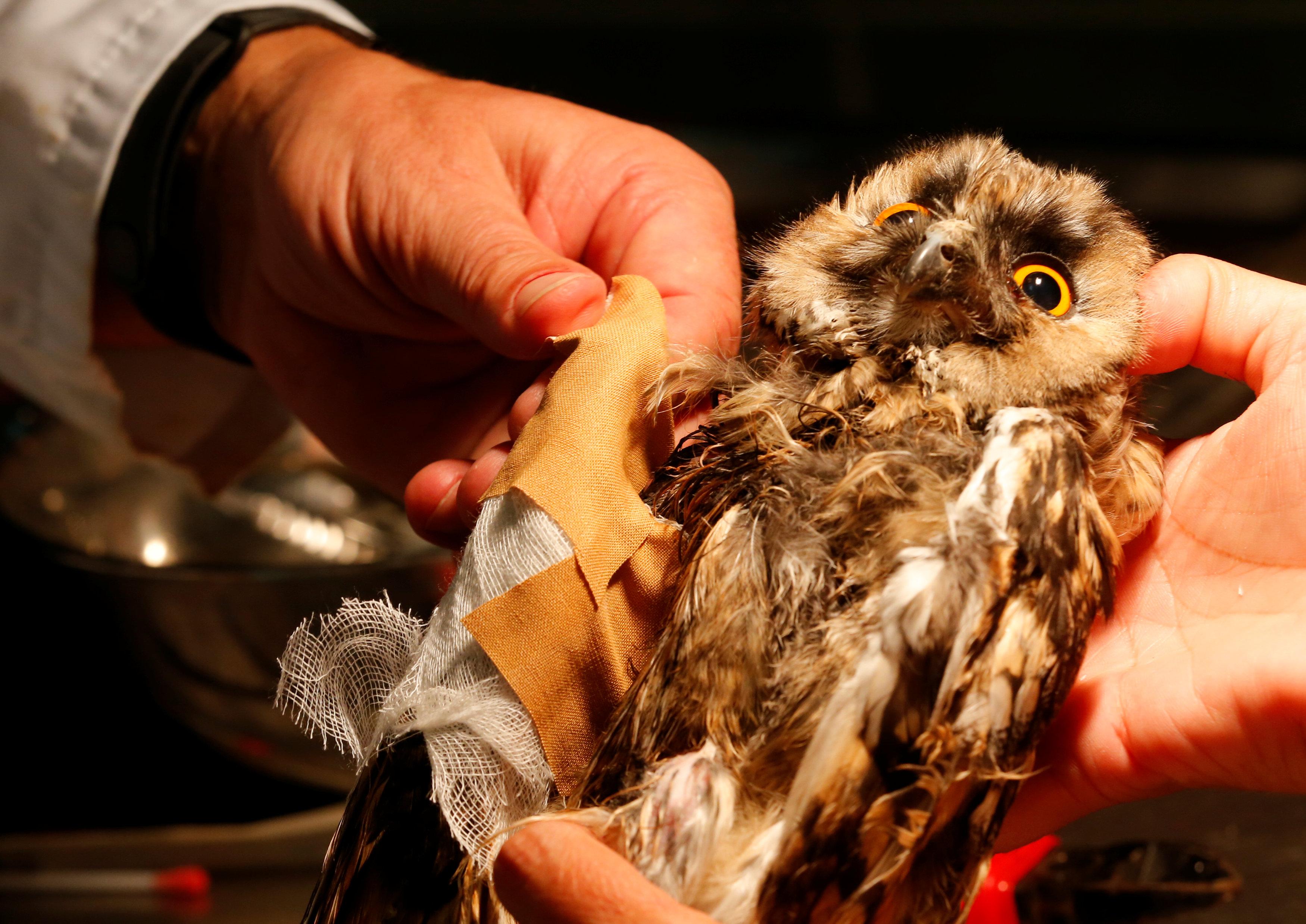 In pictures: Hungarian veterinarian treating wild birds