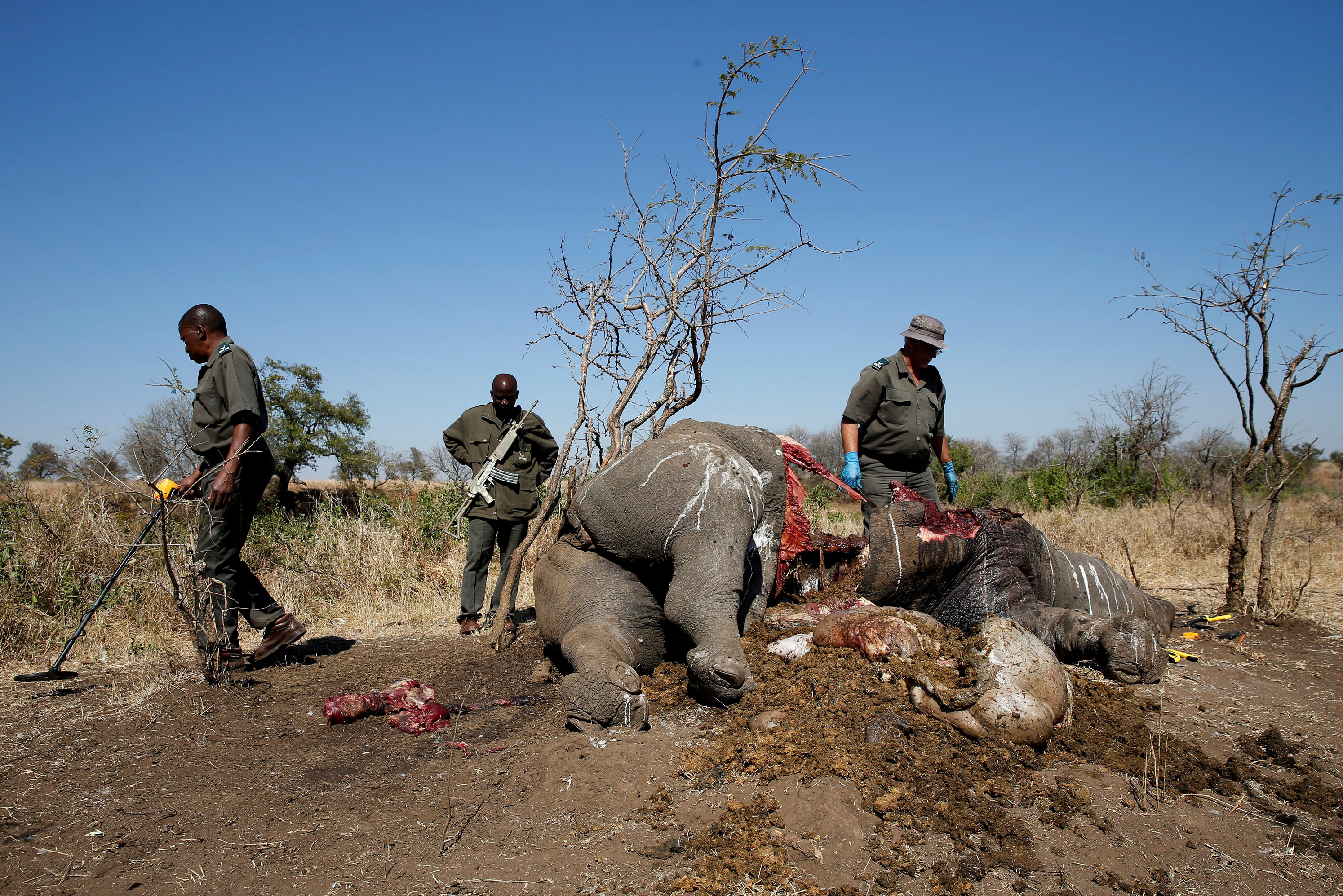Rhino poaching in South Africa dips from record high