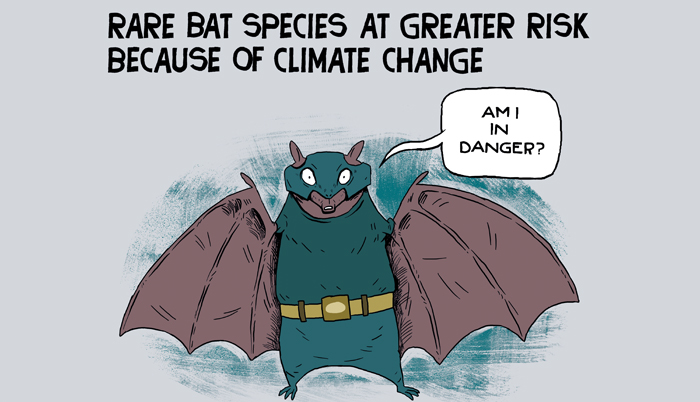 Bat species at risk because of climate change