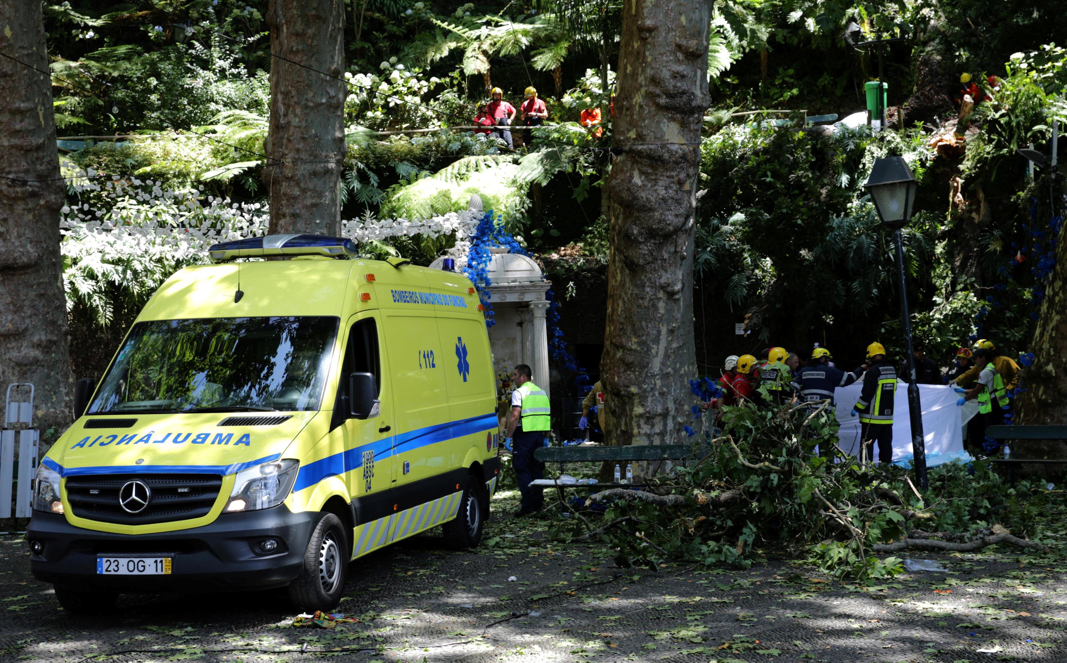 Falling tree kills 12 at Catholic festival in Portugal