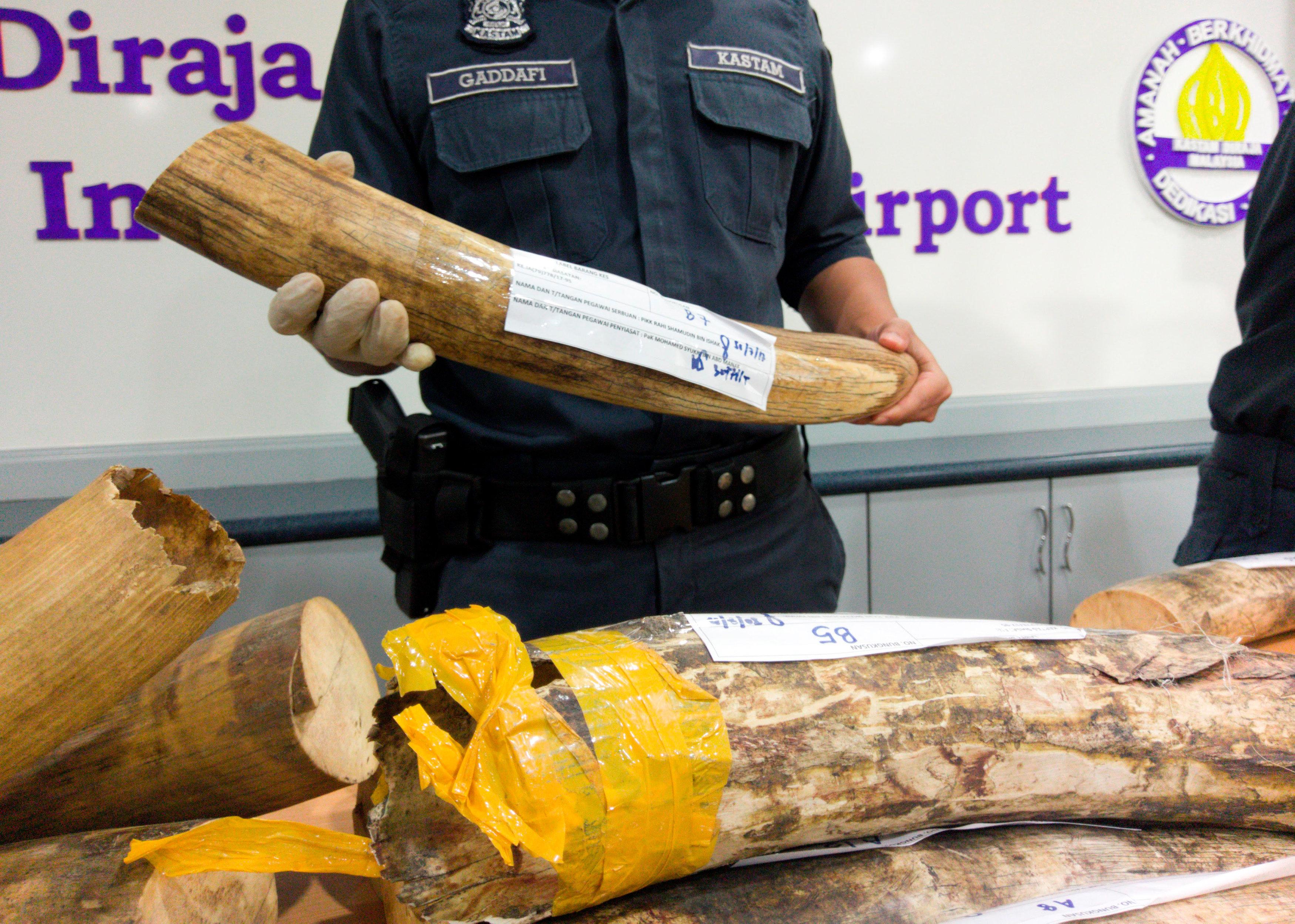 Malaysia seizes trafficked ivory tusks, pangolin scales worth nearly $1 million