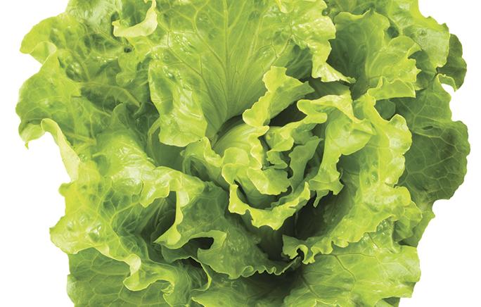 One ingredient 5 ways: Lettuce