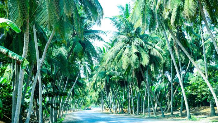 Oman tourism: Khareef Salalah visitor numbers cross 600,000 mark