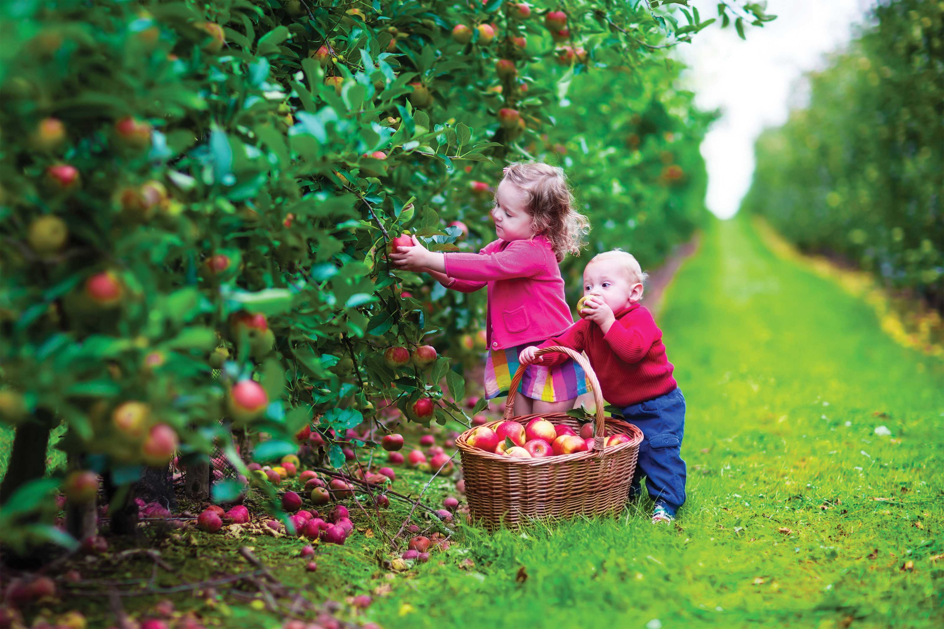 Choose organic when it comes to your child