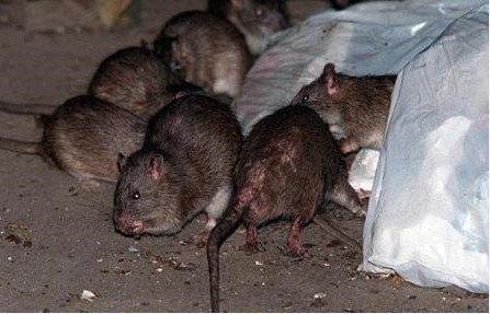 وفاة 20 شخصا بالطاعون في مدغشقر