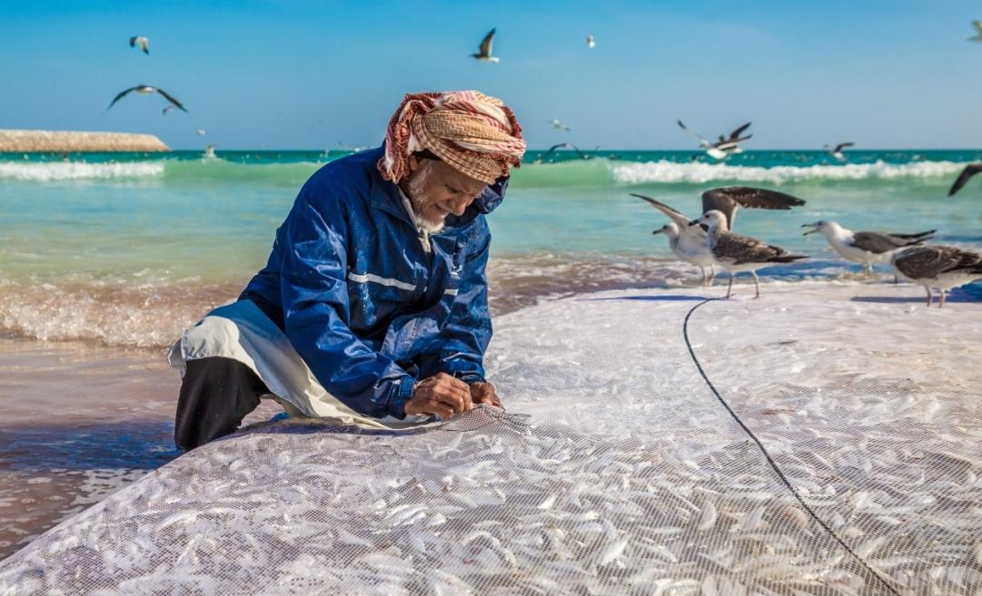 انطلاق موسم صيادة السردين (الضواغي) بمحافظة ظفار