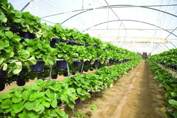 الساجواني: توفير 16 ألف وظيفة في القطاع الزراعي