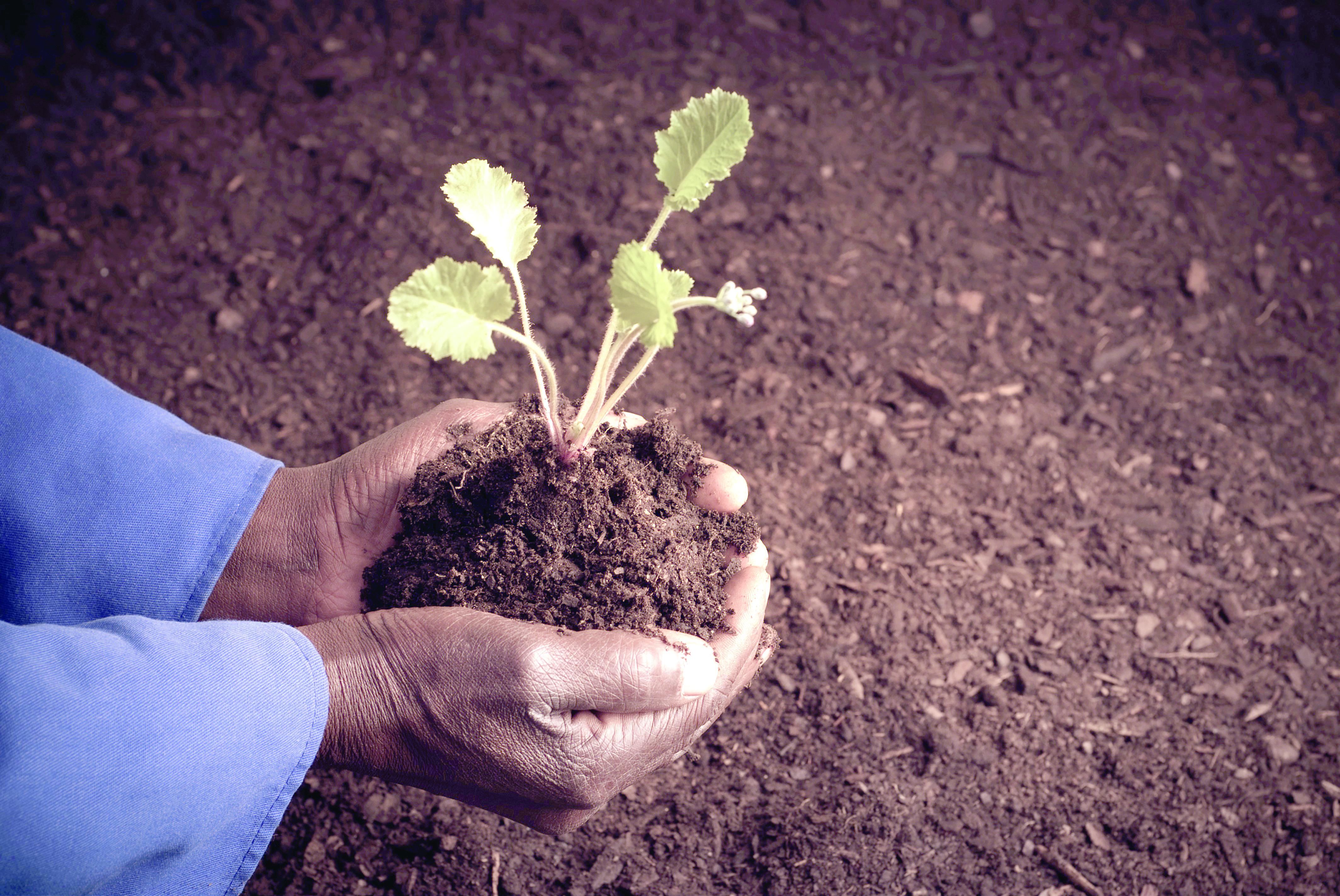 الساجواني: 16 ألف وظيفة جديدة في القطاع الزراعي