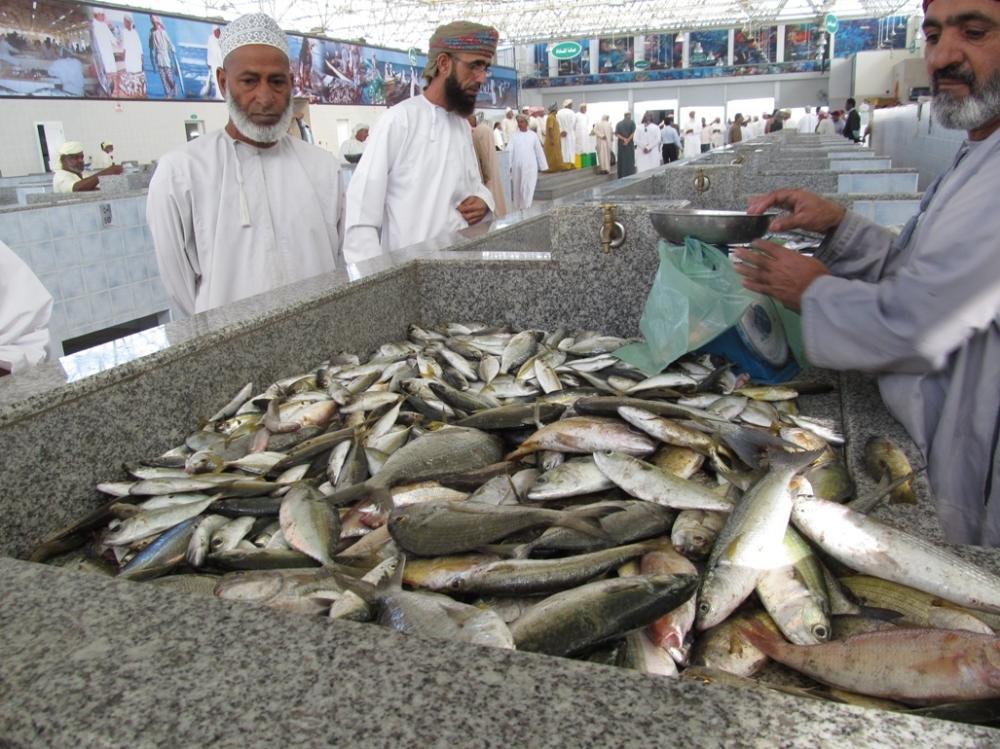 781 مليون ريال مساهمة القطاع السمكي في الناتج المحلي عام 2023