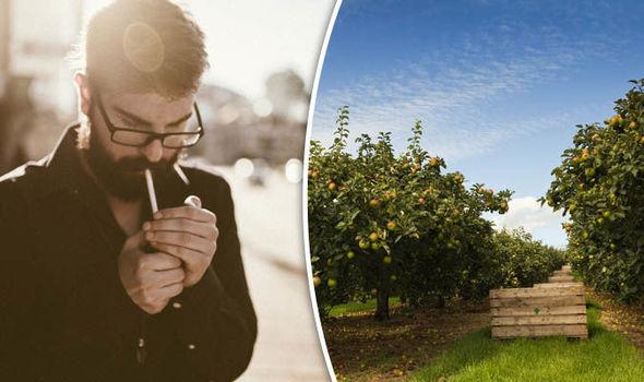 هل يُصلح التفاح ما يفسده التدخين؟