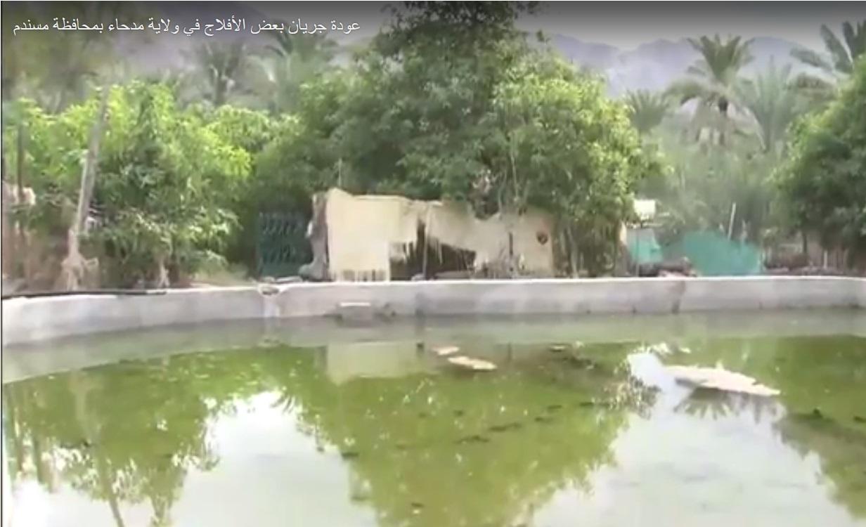 بالفيديو.. عودة جريان بعض الأفلاج في ولاية مدحاء