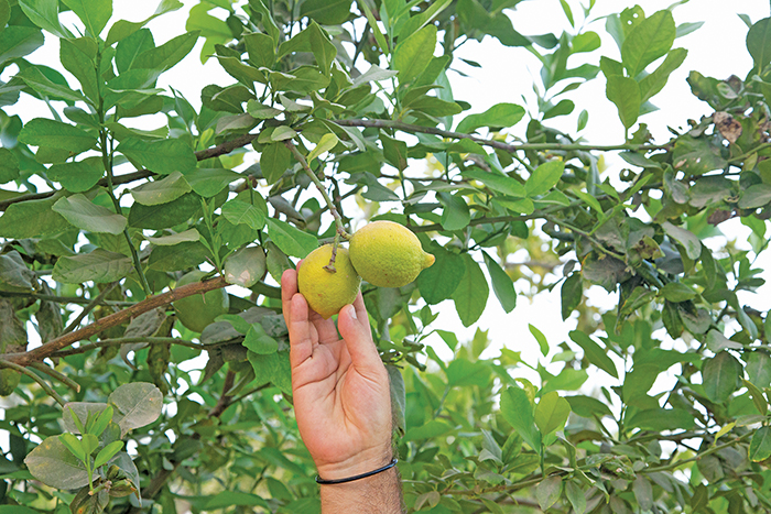 OmanPride: Omani woman shares her journey of owning Oman's first certified organic farm