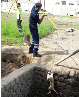 Dog rescued from well in Oman