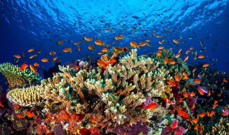 حمضية المحيطات تهدد نمو الشعاب المرجانية