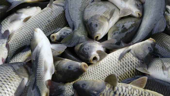 Municipal authorities destroy over 2,000 kg of fish