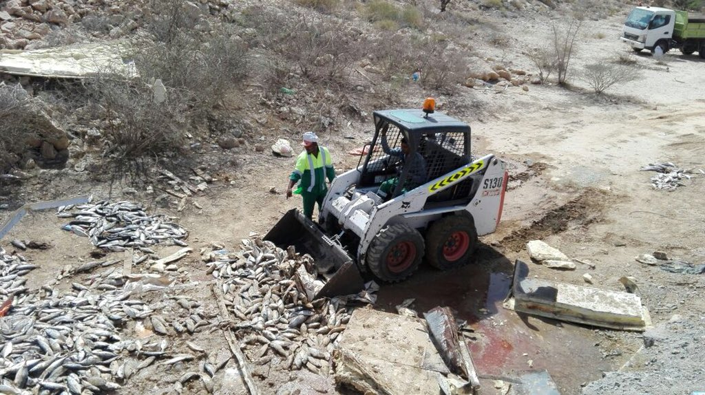 Municipality removes hundreds of fish after truck accident in Muscat