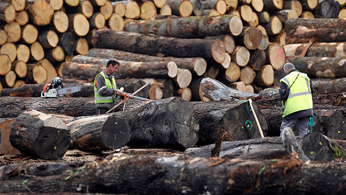 China's love affair with oak a mixed blessing for France