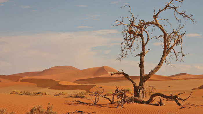 Ministry's film campaign aims to stop desertification in Oman
