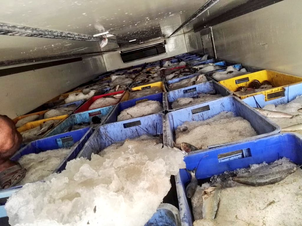 More than 14 tonnes of illegally smuggled fish seized