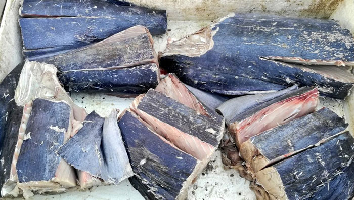 Over 350 kg of rotten fish seized in Oman