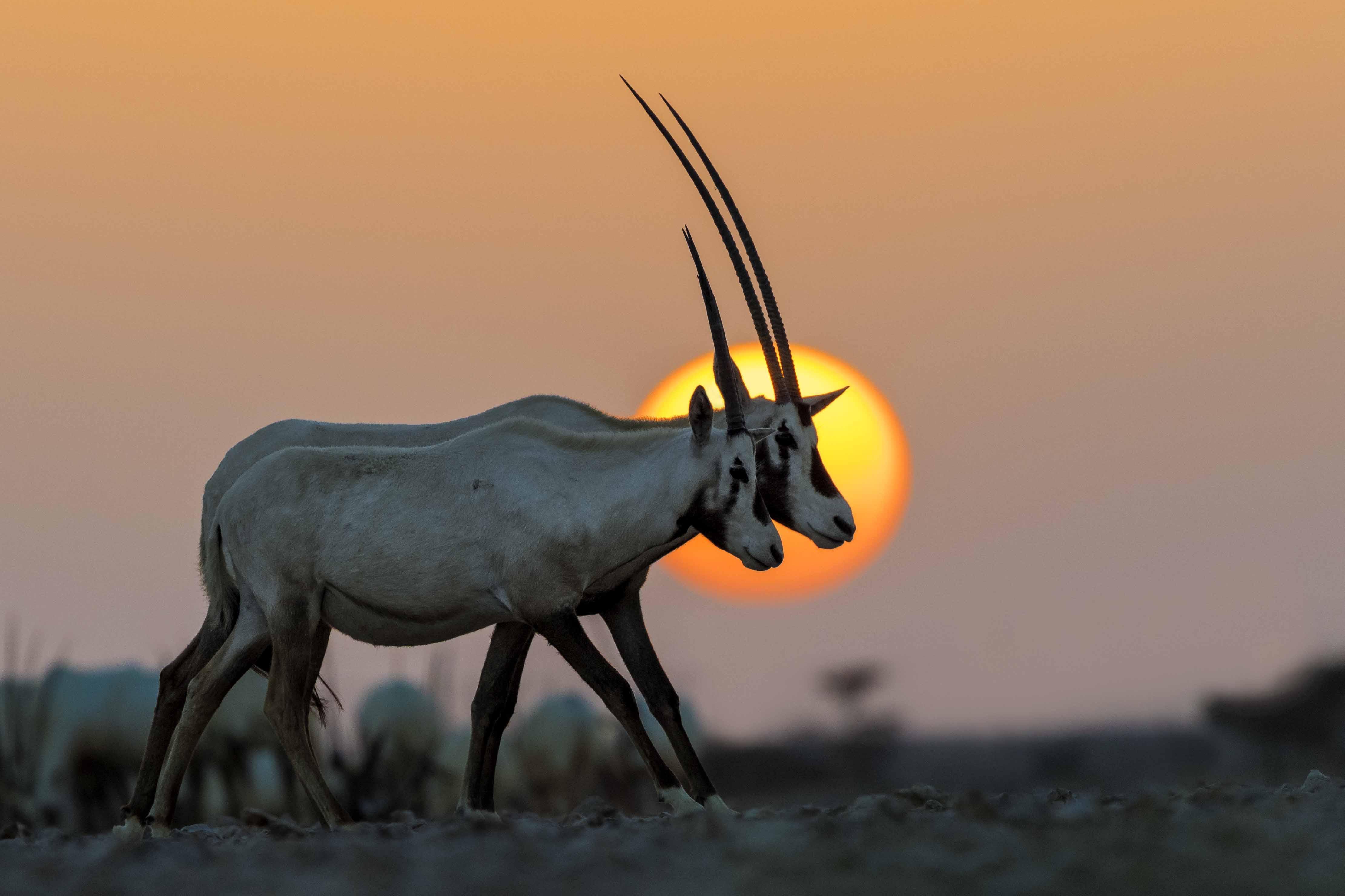 Glimpses of  Oman's natural wonders