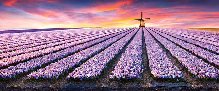 Holland - So much more than windmills, tulips and cheese!