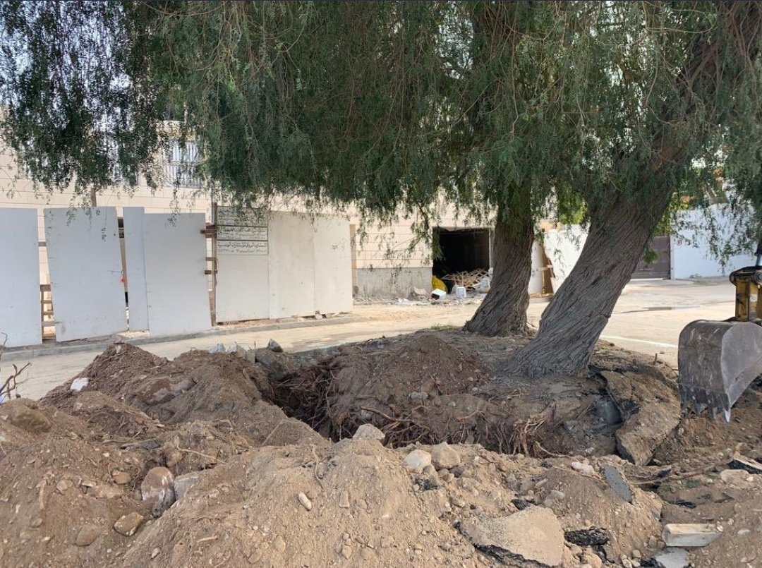 Ministry stops removal of Prosopis trees after public outcry