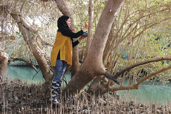 Omani researcher shows how mangroves fight climate change