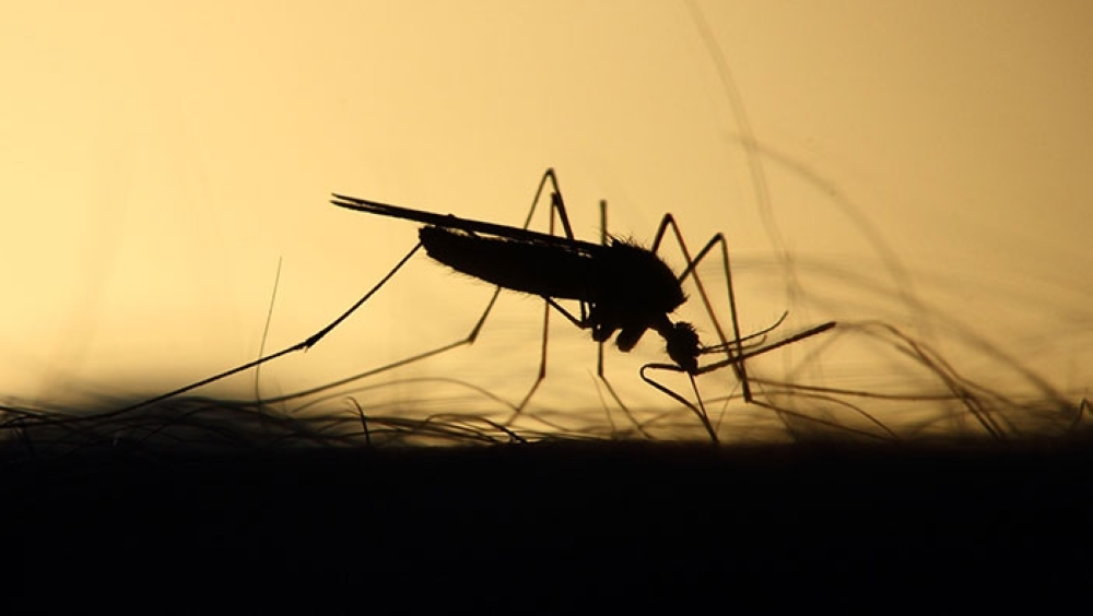 40 locally transmitted dengue cases reported in Oman