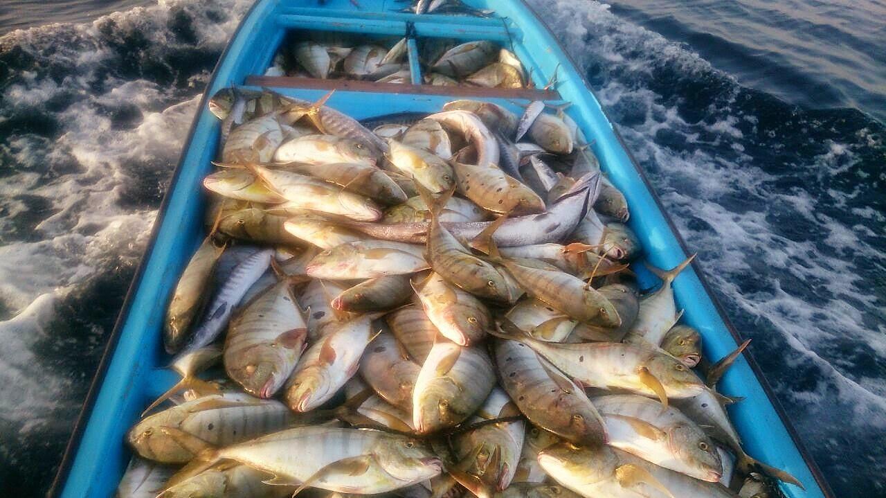 Al Wusta's marine wealth vital for Omani economy